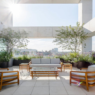 This is an example of an expansive contemporary side patio in London with concrete paving, a potted garden and a roof extension.
