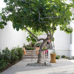 Foto di un patio o portico contemporaneo con lastre di cemento e nessuna copertura