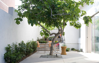 10 Terrific Trees for Your Courtyard