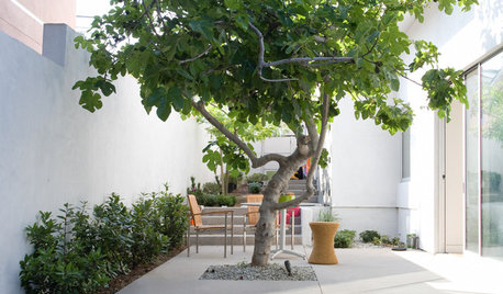 10 Spectacular Trees for Courtyards and Tight Spaces