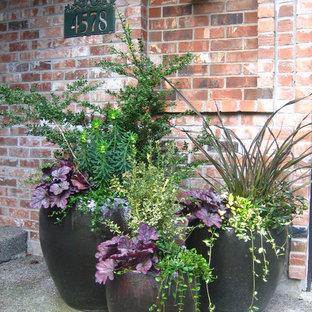 Esempio di un patio o portico classico di medie dimensioni e davanti casa con un giardino in vaso, lastre di cemento e nessuna copertura