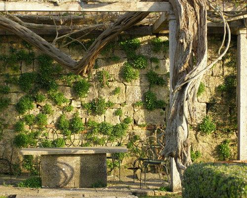 Tuscan Patio Vertical Garden Photo In Portland With A Pergola