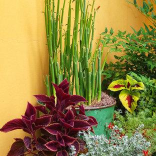 Esempio di un patio o portico boho chic in cortile con un giardino in vaso