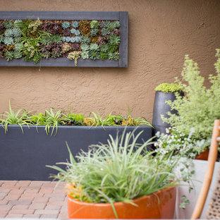 Idéer för en mellanstor modern gårdsplan, med en vertikal trädgård och marksten i betong