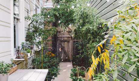 10 Ways to Make the Most of Your Side Yard