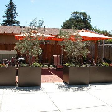 Novato contemporary garden
