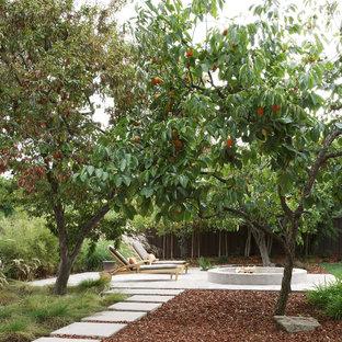 Fruit Tree Gardening Houzz