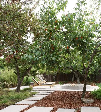 Contemporary Patio by Arterra Landscape Architects