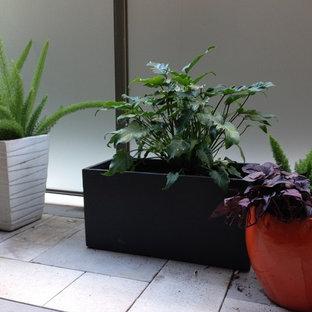 Esempio di un piccolo patio o portico contemporaneo in cortile con un giardino in vaso