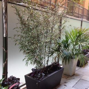 Ispirazione per un piccolo patio o portico contemporaneo in cortile con un giardino in vaso