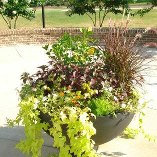 Idee per un piccolo patio o portico tropicale in cortile con un giardino in vaso, lastre di cemento e nessuna copertura