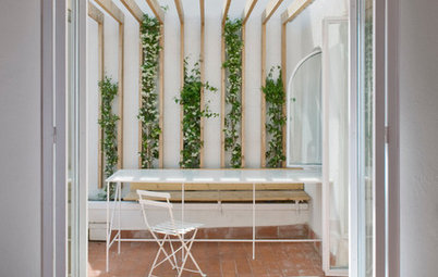 Fresh Ideas for Bringing Climbing Plants & Vines Into the Home