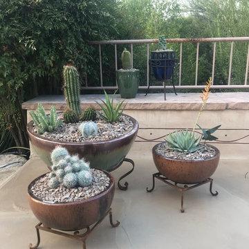 Sabino Estates Dish Gardens After Installation