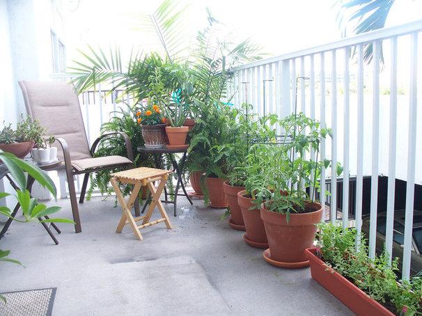 Patio Small Gardens