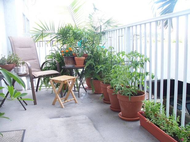 10 vari t s de fruits et l gumes faciles faire pousser en pots for Plantes pour terrasse ensoleillee