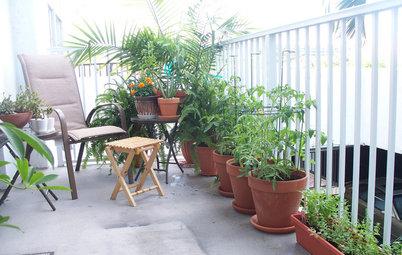 11 toppenfina idéer för dina krukväxter – ute och inne