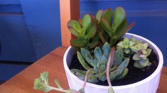 Small Succulent Arrangement