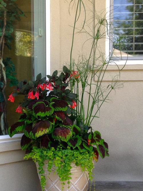 plante exotique en pot cheap plante exterieur resistant au gel plante exotique exterieur plante. Black Bedroom Furniture Sets. Home Design Ideas