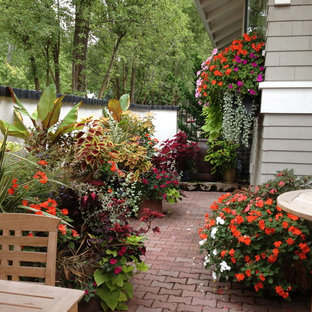Shade Loving Plants For Containers Tropical Houzz