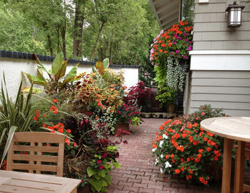 Summer Container Plantings