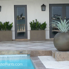 Contemporary Patio by FosterPlants, Inc.
