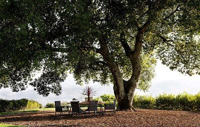 Родовое дерево: Выбираем растения «на века» — с умом