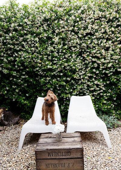 Hundgerechter Garten So Fuhlt Sich Ihr Fiffi Draussen Pudelwohl
