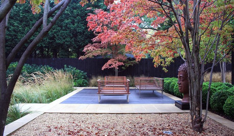 How to Use One-off Special Trees to Add Wow to Your Garden