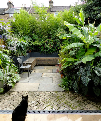 Tropical Patio by antonia schofield garden design