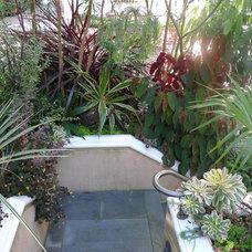 Contemporary Patio by Garden Fantasia