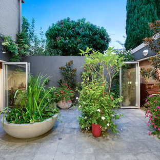 Eclectic courtyard patio in Sydney with concrete pavers and no cover.