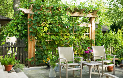 10 Creative Ways to Bring Structure to Your Outdoor Room