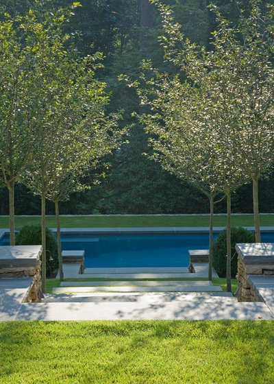 Classico Piscina by Golightly Landscape Architecture
