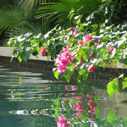 asian pool Balinese Asian Garden