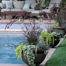 Eclectic Pool by Derviss Design