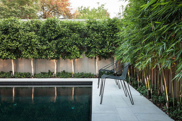 10 ways to make your small garden feel bigger cabramatta - Tall trees for small spaces style ...