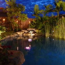 Tropical Pool by Placid Pools