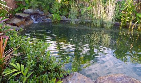 Piscinas ecológicas: Guía básica para entender cómo funcionan