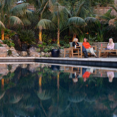 Tropical Pool by Golden Gate Palms and Exotics