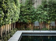 Quelles plantes choisir pour faire une haie de jardin ?