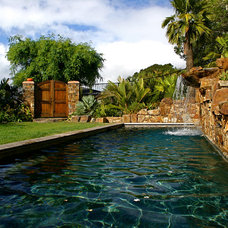 Eclectic Pool by Golden Gate Palms and Exotics