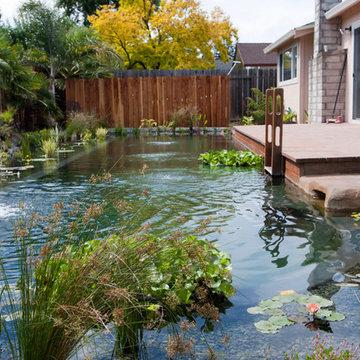 Natural Swimming Pool 2