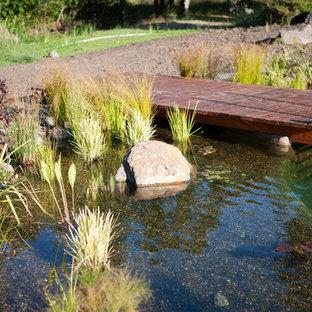 Ejemplo de piscina natural, costera, grande, a medida, en patio trasero, con gravilla