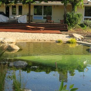 Imagen de piscina natural, marinera, grande, a medida, en patio trasero, con gravilla
