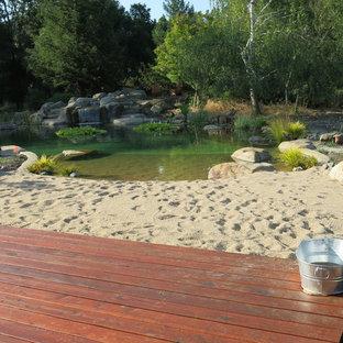 Foto di una grande piscina naturale stile marino personalizzata dietro casa con ghiaia