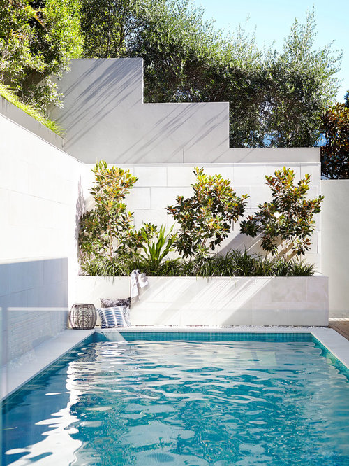 Weeping white spruce home design ideas pictures remodel for Pool design houzz