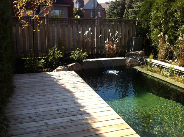 Natural swimming pools more beauty no chemicals for Garden plunge pool uk