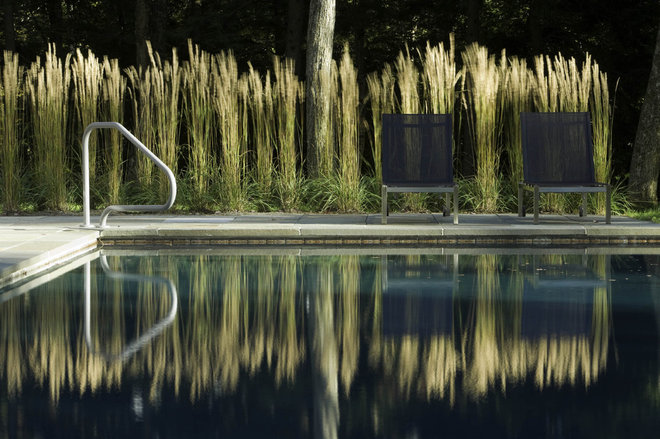 Modern pool by wagner hodgson for Best tall grasses for privacy