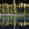 Prydnadsgräs - perfekt för nybörjare och helgträdgårdsmästare