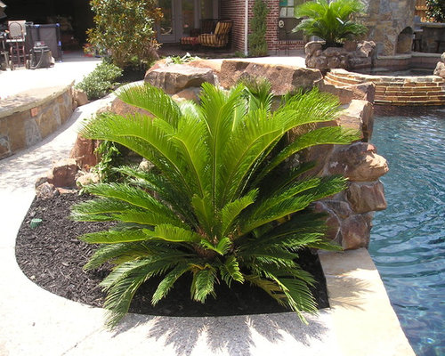 238 Sago Palms Landscape Design Ideas Amp Remodel Pictures